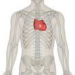 82 Million - Number of Americans with CVD